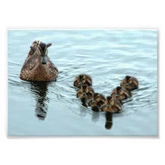Formación del pato foto