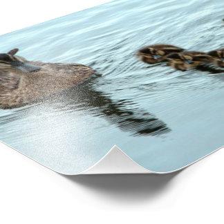 Formación del pato fotografias