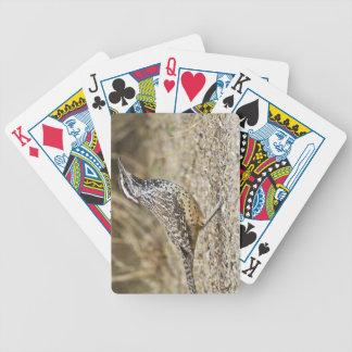 Forraje adulto del wren de cactus baraja de cartas