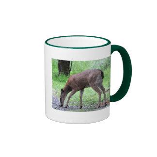 Forraje de los ciervos de Blacktail Tazas De Café