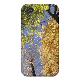 Forrest de árboles altos iPhone 4/4S carcasa