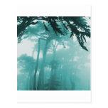 Forrest Fog photo painting Postcard