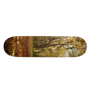 Forrest in the Autumn Skate Board