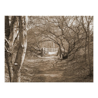 Forrest Trail XL Canvas Poster