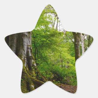 Forset místico pegatina en forma de estrella