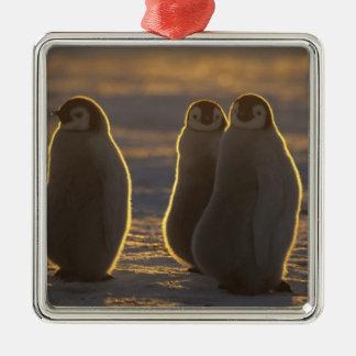 Forsteri de los pingüinos, del Aptenodytes de Adorno Navideño Cuadrado De Metal