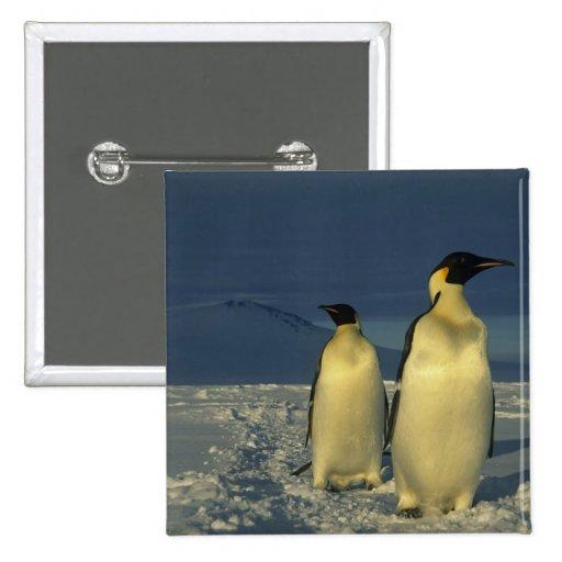 Forsteri de los pingüinos, del Aptenodytes de empe Pin Cuadrada 5 Cm
