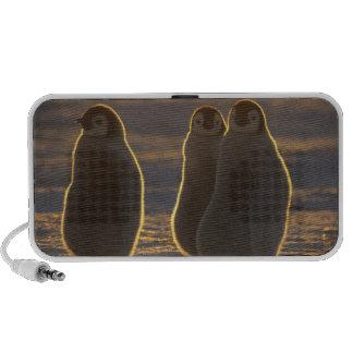Forsteri de los pingüinos, del Aptenodytes de empe iPhone Altavoz