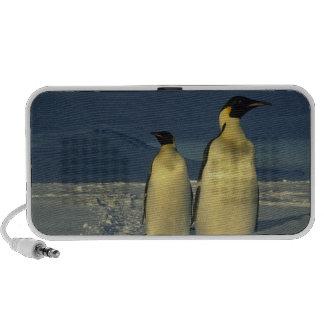 Forsteri de los pingüinos, del Aptenodytes de empe Notebook Altavoces