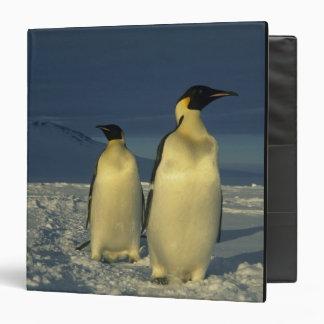 Forsteri de los pingüinos, del Aptenodytes de empe