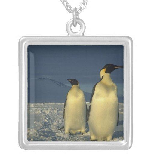 Forsteri de los pingüinos, del Aptenodytes de empe Colgantes Personalizados