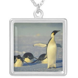 Forsteri de los pingüinos, del Aptenodytes de empe Pendiente Personalizado