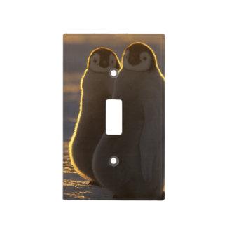 Forsteri de los pingüinos, del Aptenodytes de empe Cubierta Para Interruptor