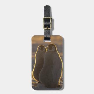 Forsteri de los pingüinos, del Aptenodytes de Etiquetas De Equipaje