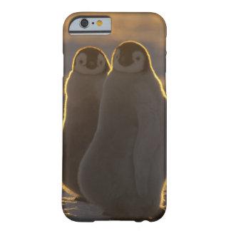 Forsteri de los pingüinos, del Aptenodytes de Funda Barely There iPhone 6
