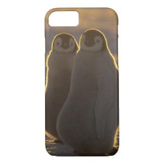 Forsteri de los pingüinos, del Aptenodytes de Funda iPhone 7