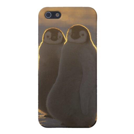 Forsteri de los pingüinos, del Aptenodytes de iPhone 5 Fundas