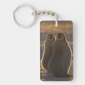 Forsteri de los pingüinos, del Aptenodytes de Llavero Rectangular Acrílico A Doble Cara