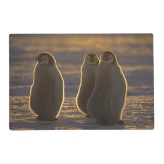 Forsteri de los pingüinos, del Aptenodytes de Salvamanteles