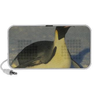 Forsteri del pingüino, del Aptenodytes de emperado Altavoces