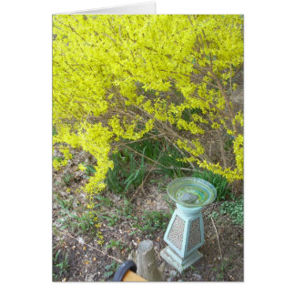 Forsythia in Bloom Card