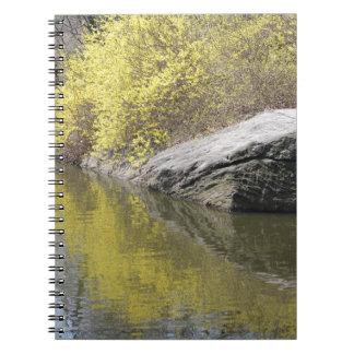 forsythia y reflexión libro de apuntes