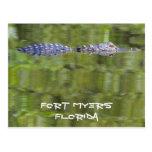 alligator, florida, postcard, florida alligator