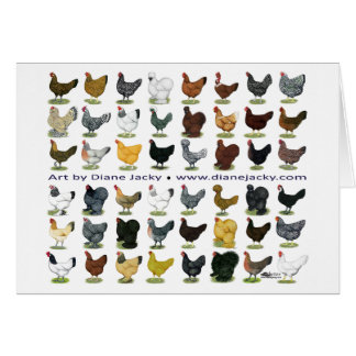 Forty-eight Hen Promo Greeting Card