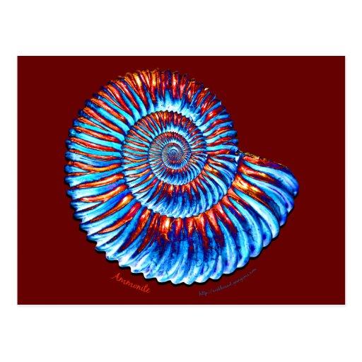 Fósil de la amonita postal