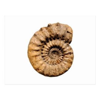 Fósil de la amonita tarjetas postales