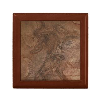 Fósil del Archaeopteryx - caja de regalo