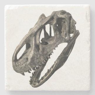 Fósil del cráneo posavasos de piedra