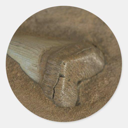 Fósil del diente del tiburón pegatinas redondas