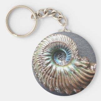 Fósil descascado nacarado hermoso de la amonita llavero redondo tipo pin