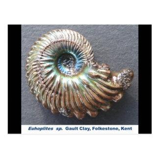 Fósil descascado nacarado hermoso de la amonita tarjeta postal