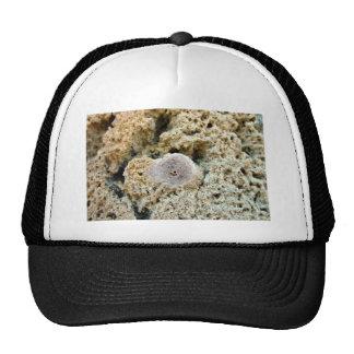 Fósil en piedra caliza gorras