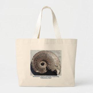 Fósil hermoso de la amonita de la pirita que muest bolsa