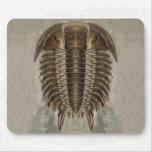 Fósil Mousepad de Trilobite Tapetes De Raton