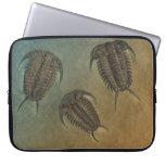 Fósil Trilobite de Ceraurus Funda Portátil