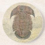 Fósil Trilobite de Yuepinquia Posavasos Cerveza
