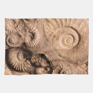 Fósiles de Shell Toallas De Mano