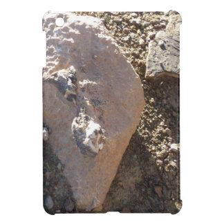 Fósiles del sur del parque nacional del Gran Cañón