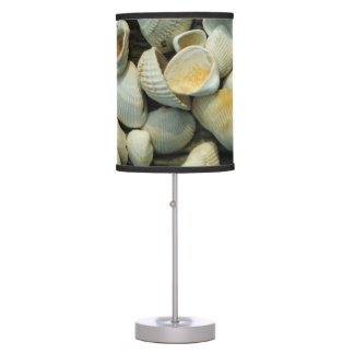 Fossil Ark Clam Shell Collection Lamp