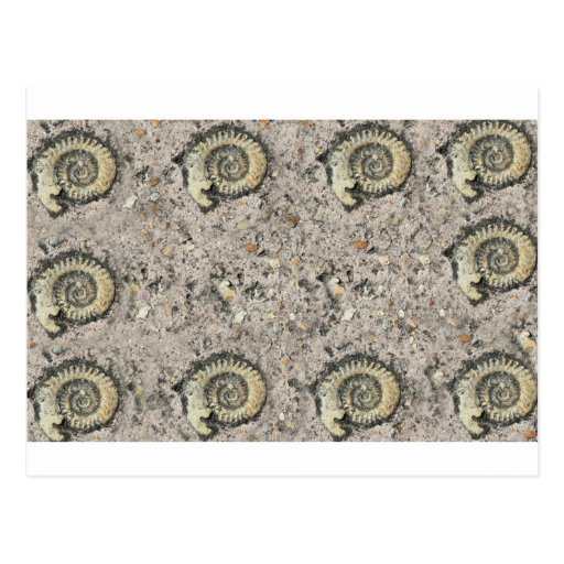 fossil background postcard