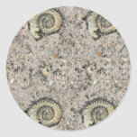 fossil background round stickers