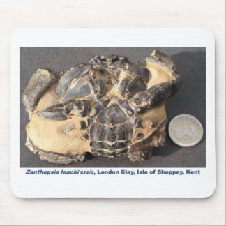 Fossil crab from the Eocene London Clay Mouse Pad