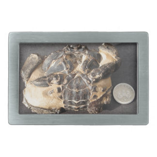 Fossil crab from the Eocene London Clay Rectangular Belt Buckle