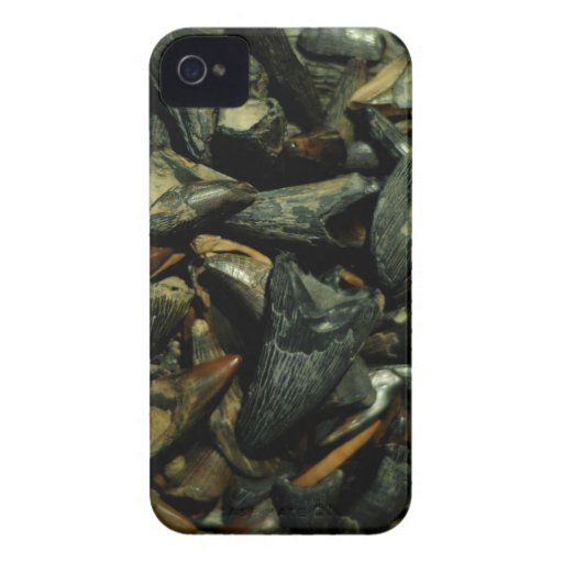 Fossil Crocodile Teeth iPhone Case iPhone 4 Cases