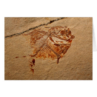 Fossil Fish from the Cretaceous of Lebanon Card