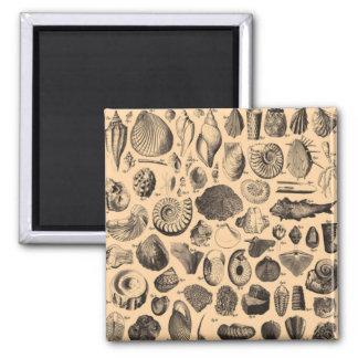 Fossil Fridge Magnet
